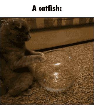 A catfish GIF. Ha ha ha ha ha. Aw aw aw aw aw