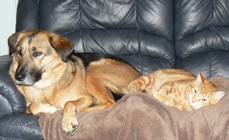 Winnie and Miss Kitty relaxing together on New Year's Day 2013