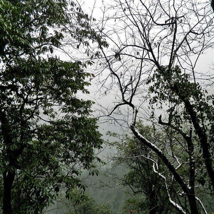 Monkeys in the mist.     #chinagram #instatravels #effthedailygrind