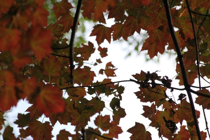 Fall in Niagara, ON by Jason Bleakley