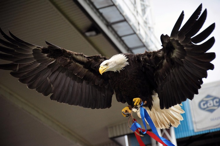 Kayla the Eagle - Palace v Peterborough - http://www.andyrobertsphotography.co.uk/