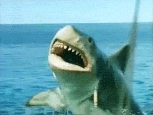 How 'Jaws: The Revenge' Jumped the Shark
