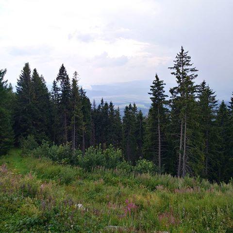 🌲❤🌲. . . . . #hike #hightatras #foresttherapy #heartwarming #green #calm #hikestagram