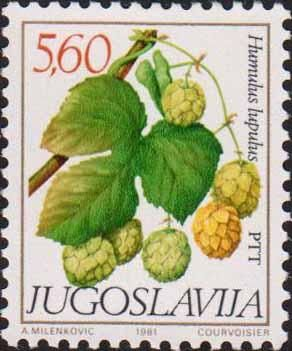 Yugoslavia, 1981. Humulus lupulus