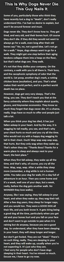 Dogs Don't Die