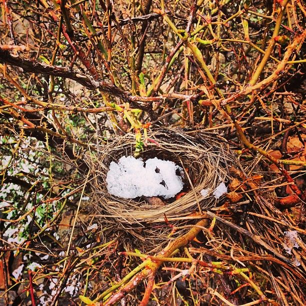 A nest of snow - my dream home #turkey #kars #birds