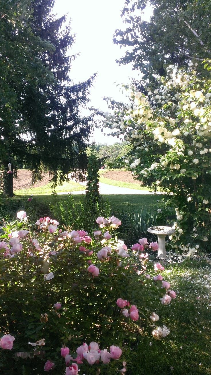 23 best Colonial Revival Gardens images on Pinterest   Colonial ...