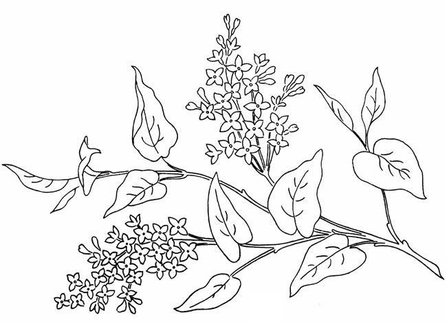 хром вариант, раскраска цветки сирени каждый