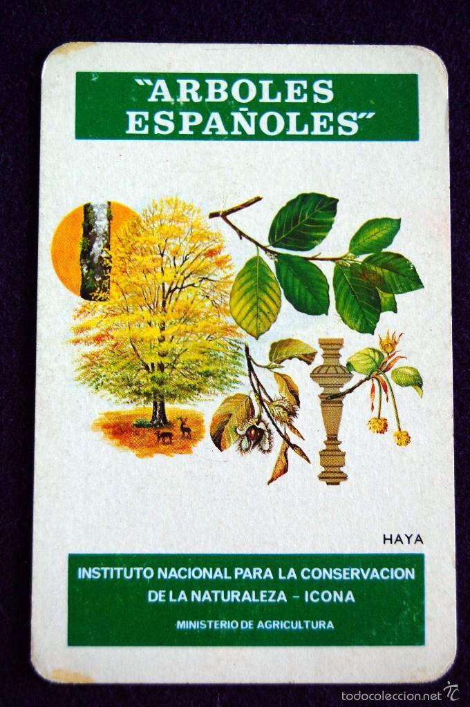 CALENDARIO FOURNIER. ARBOLES ESPAÑOLES. HAYA. 1976. ICONA - MINISTERIO AGRICULTURA.