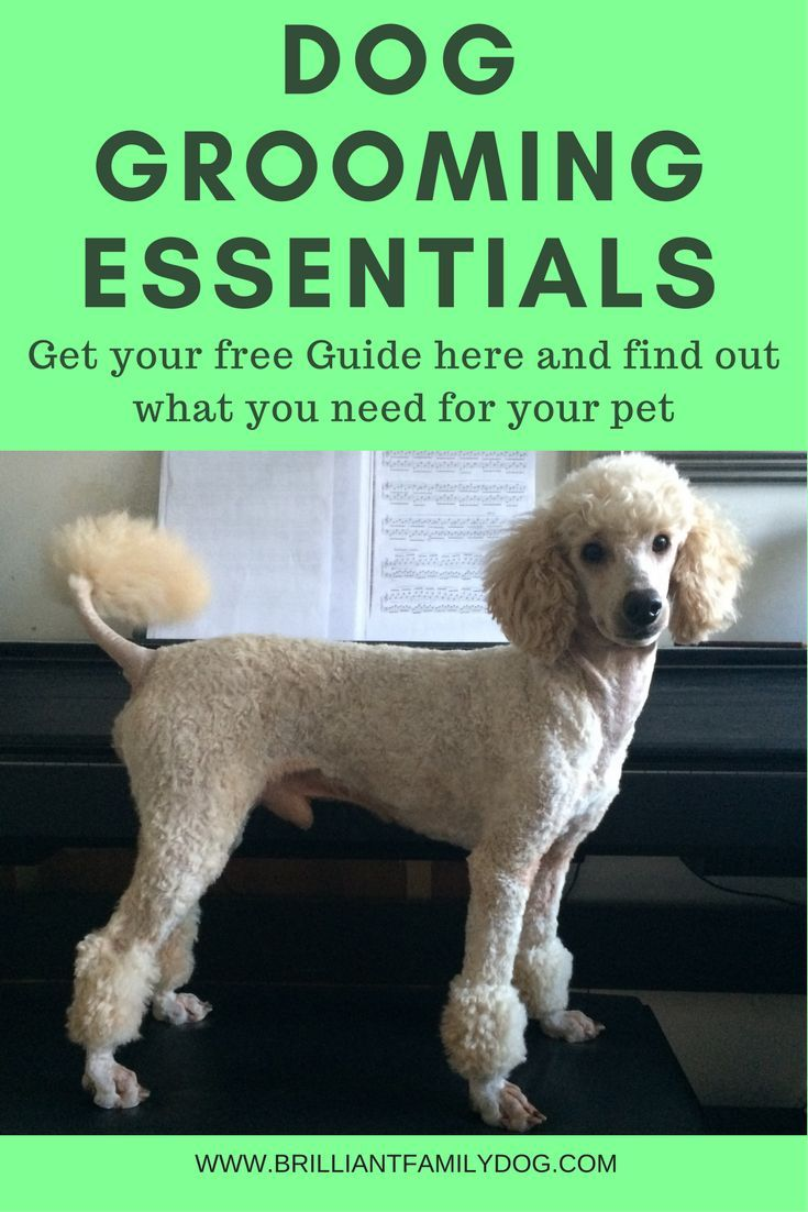 If Your Dog Is Bald You Can Skip This One Dog Grooming Dog Care