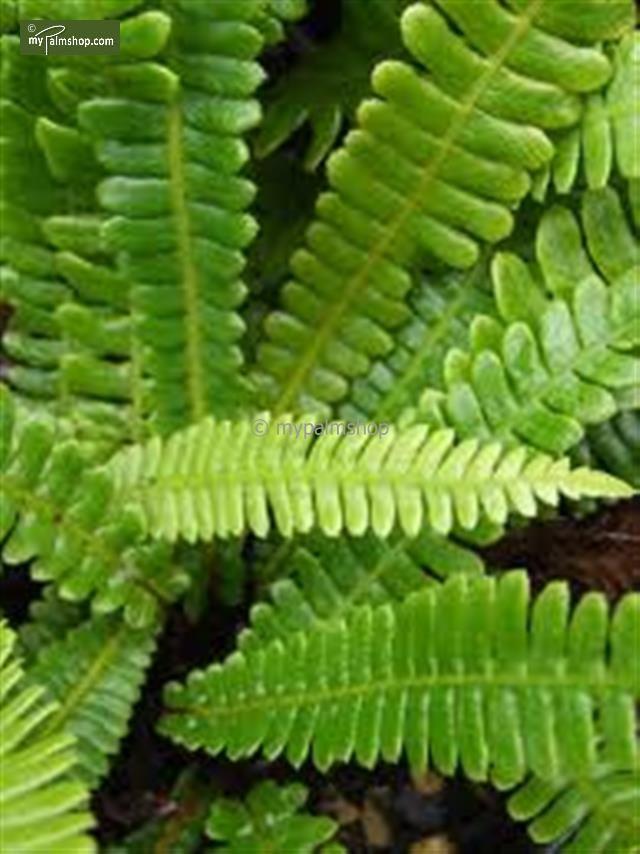 Les 25 meilleures id es de la cat gorie jardin feuilles persistantes sur pinterest 100 m - Tuer un arbre avec de l acide ...