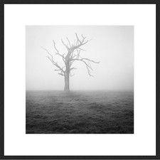 Misty Weather II
