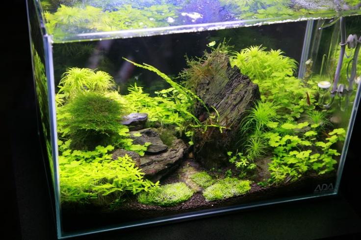 :) the planted tank #aquarium