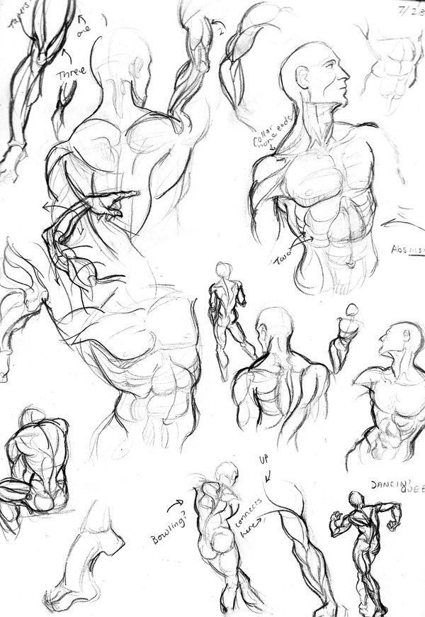 Male anatomy drawing practice