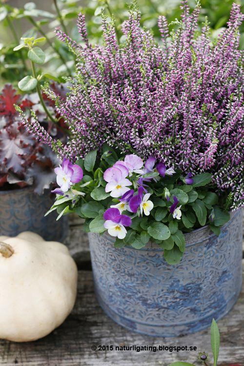 Naturliga Ting Trädgårdsblogg: Höstpensé