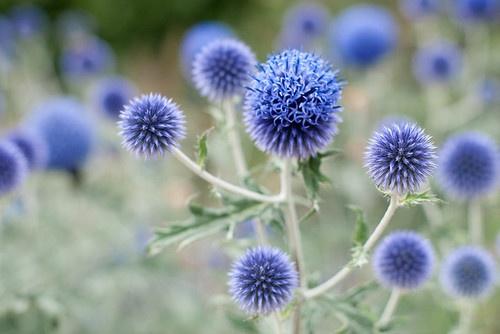 Blue bowls by Gogoye on Flickr.