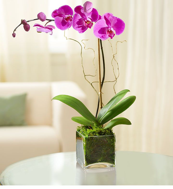 The Easiest Gifts To Give This Holiday Season If You Re A Super Lazy Person Beautiful Orchids Fresh Flower Market Potted Trees