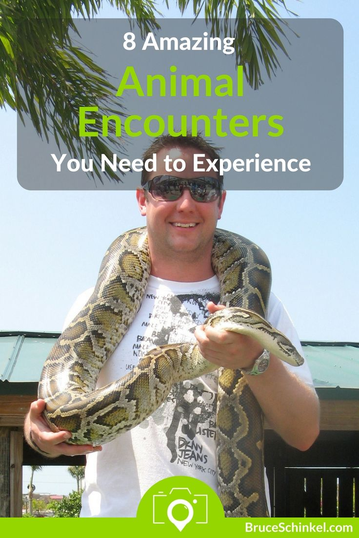 Do you love helping rescue animals while you travel?  I certainly do!  In this post I take you to some of the most amazing animal encounters I've found in my travels.  Click Here and let me know where else I need to visit | amazing animal encounters | animal experiences | wildlife rescue | wildlife sanctuary |