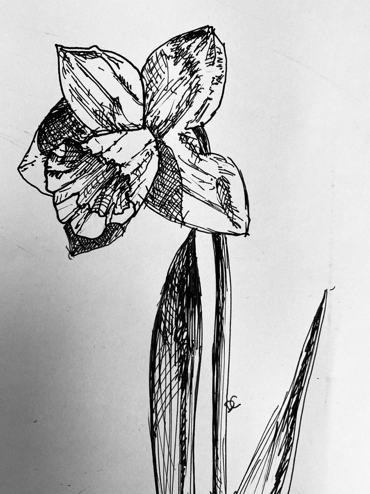 Ink daffodil in 2020 ink drawing techniques ink pen