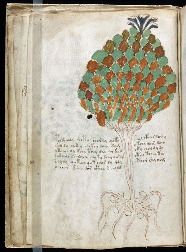 Beinecke artichoke