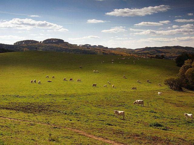 Pastviny v přírodním parku Chřiby