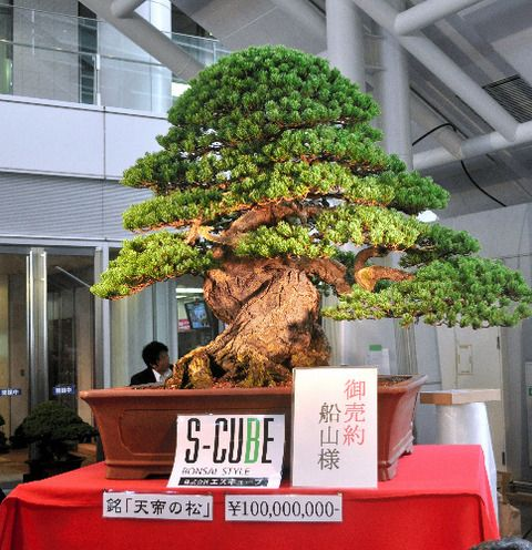 一億円の盆栽をご覧くださいwww : ぱる速報