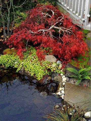 Best 25 Japanese Garden Plants Ideas On Pinterest Small