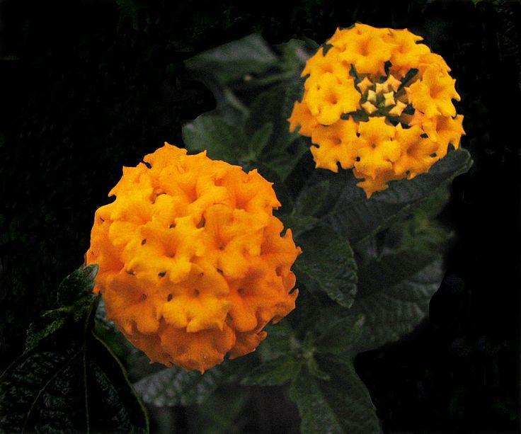 Beautiful Flower (Photographic Print - Unframed))