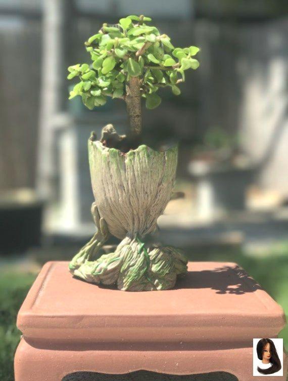 Baby Bonsai Bonsai Trees Office Gift Groot Jade Tree Jade Bonsai Tree Baby Groot Bonsai Gift Jade Bonsai Tree Baby Groot Bonsai Gift