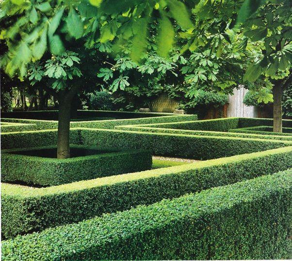 Lawn Hedges