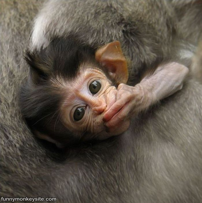 Funny Monkey Popular Cell Phone Wallpapers 90 Hd Wallpaper