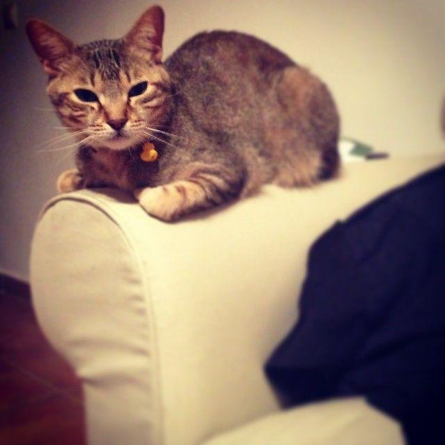 Y a #brian también parece que le gusta el nuevo #sofa de @ikeausa