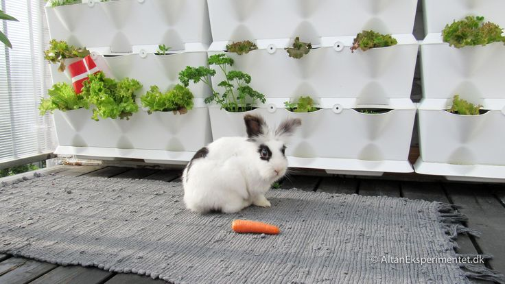 Fødselsdag på altanen - I dag fylder min bedste ven 10 år #balcony #balconygarden #bunny #rabbit #pets #cutepets #urbangarden #birthday #altan #minigarden #myminigarden #plantevæg #verticalgarden #verticalgardens