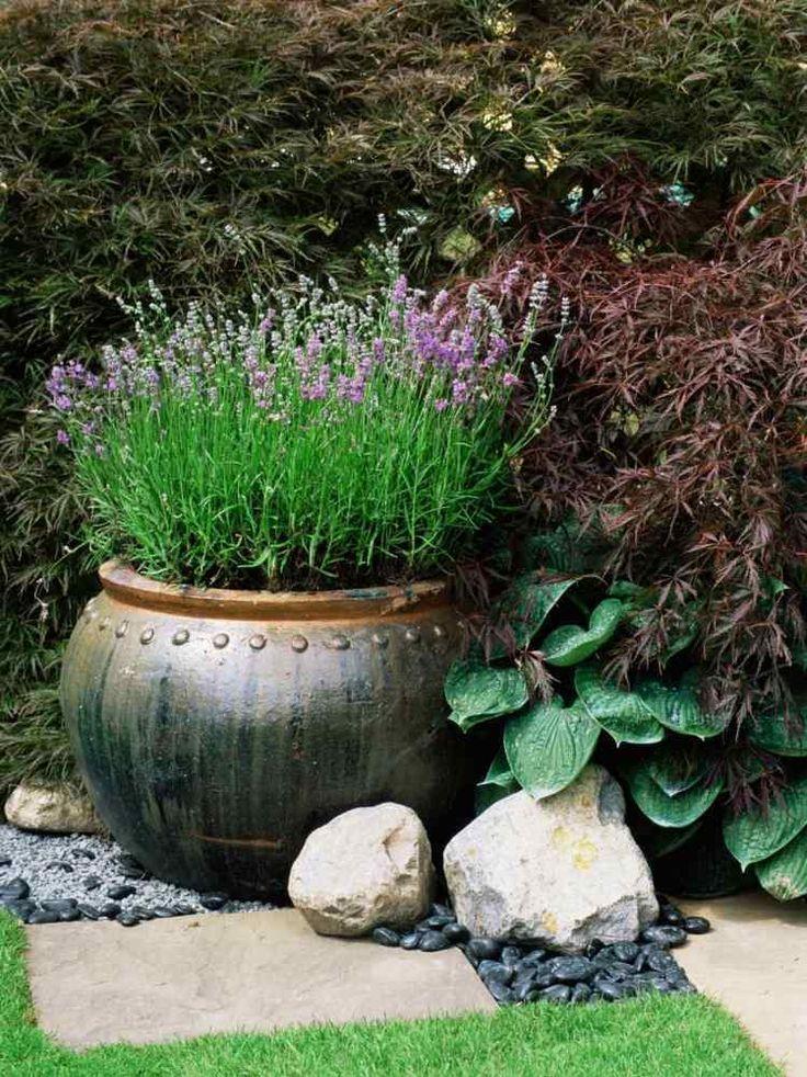 jardinière en pierre ronde avec lavande et érable du Japon