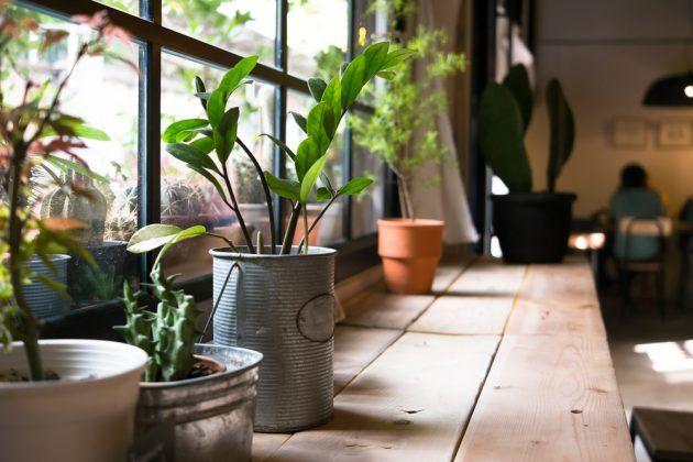 Grune Deko Inspirationen Dekoration Pflanzengrun Kleine Topfpflanzen Pflanzen Zimmerpflanzen