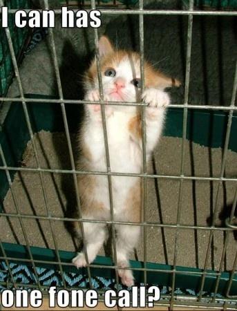 Jail kitteh!! LOVE CATS 2 Pinterest Haha