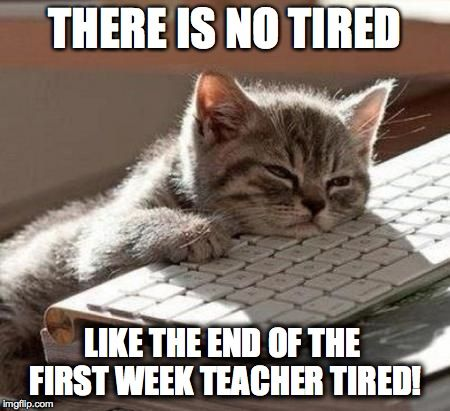 tired cat | THERE IS NO TIRED LIKE THE END OF THE FIRST ...
