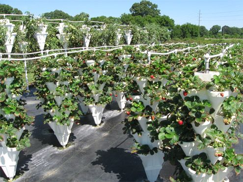 Health Benefits Of Growing Your Own Food Hydroponically