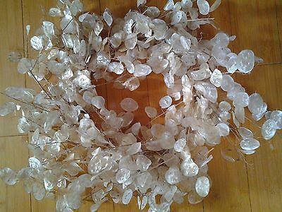 Autumn Harvested Money Plant (lunaria Honesty) Wreath Subtle Crystal Augmenta – Money Plants