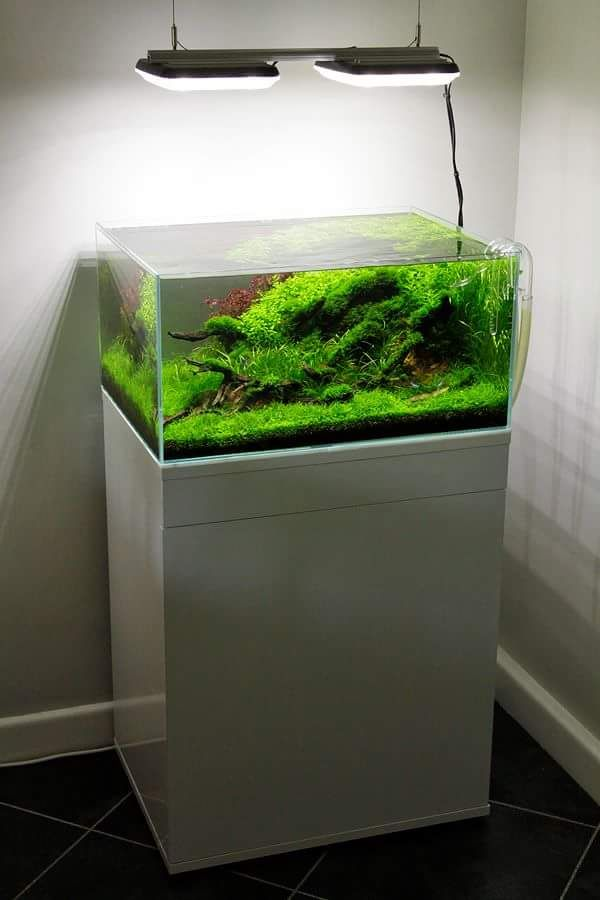 High Light Planted Aquarium by George Farmer utilizing TMC/AAP GroBeam LED  Lights