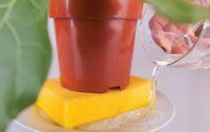 ЧТО МОГУТ ГУБКИ. Пока вы преступно моете ими посуду, они могут реально спасти мир. Например. Представьте себе: жара, природа, шашлыки. А вам надо салатик довезти до пикника не скисшим. Где набраться льда? Берем губ…