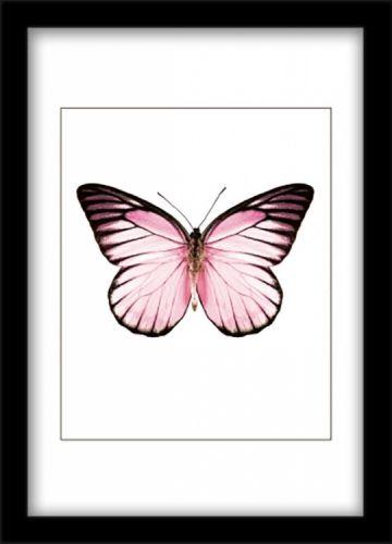 Affisch med rosa fjäril