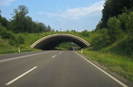 Safe Crossings for Wildlife: Creative Bridges, Natural Pictures, Wildlife Overpass, Funny Images, Animal Bridges, Green Bridges, Amazing Bridges, Bridges Germany, Wildlife Bridges
