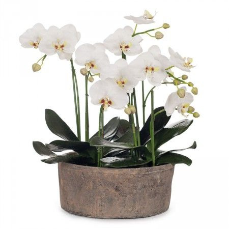 Artificial Flower Phalaenopsis Orchid 20in White
