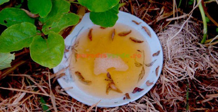 Soluţii eco împotriva limacşilor | Paradis Verde