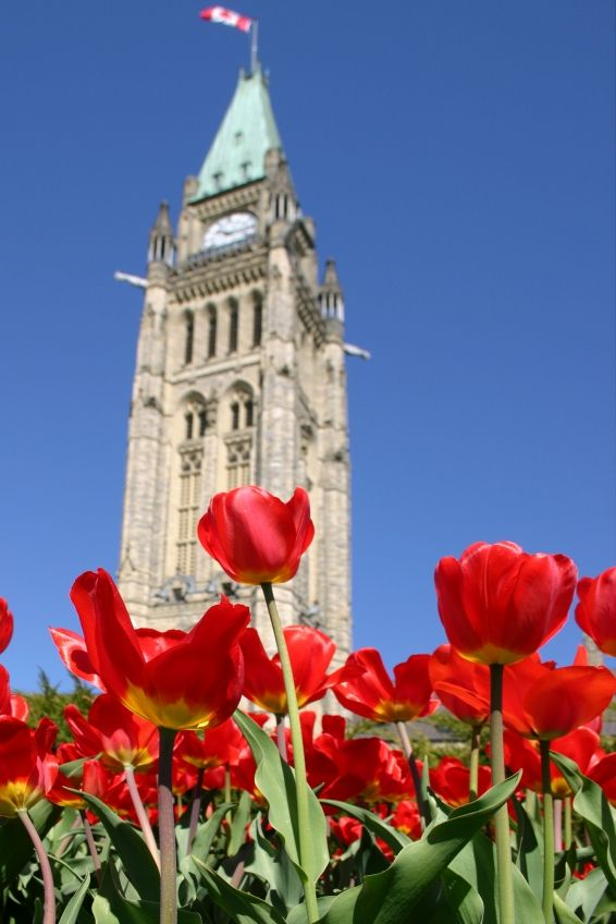 Flowers on Parliament Hill in Ottawa, Ontario, Canada. #Canada #travel #cities