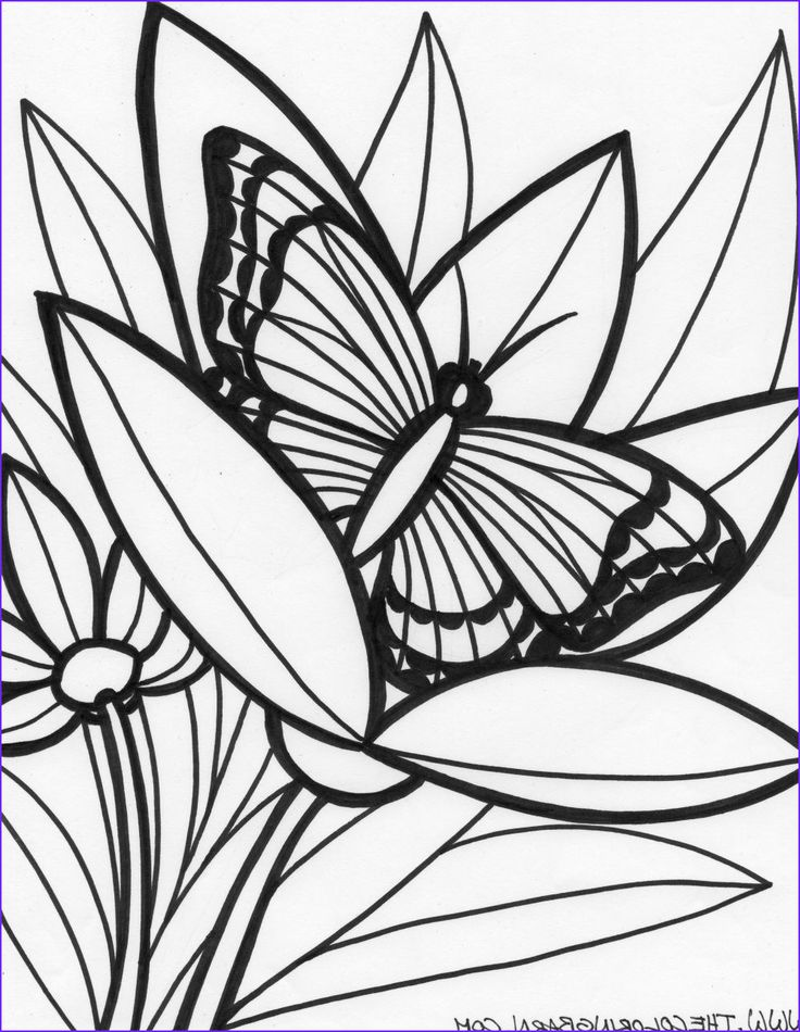 23+ Rainforest animals coloring pages ideas