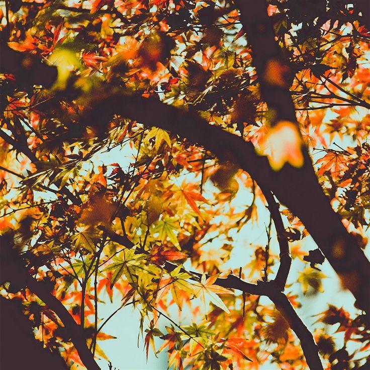 Fall Tree Leaf Autumn Nature Mountain #retina #iPad #Air #wallpaper