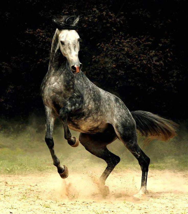 Vidi un cavallo al galoppo sfiorare il tramonto, osservai le fronde degli alberi ondeggiare alla brezza notturna,sentii la vita della Natura palpitare intorno a me... Micaela Fantauzzi