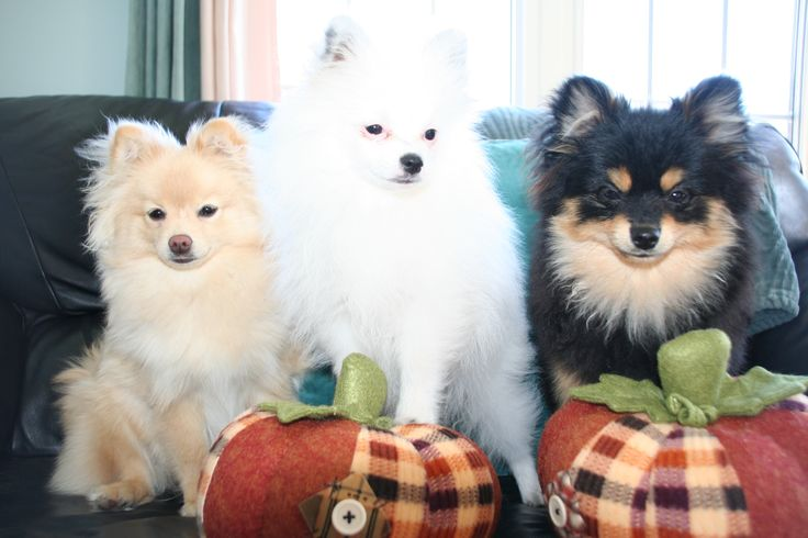 Happy Thanksgiving!  Halo, Chloe & Captain.  Follow us on FB - Adventures of Halo, Chloe & Captain.